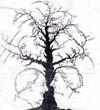 Twarze na drzewie